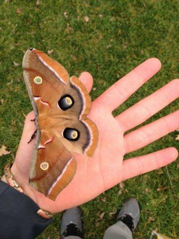 Красивата пеперуда