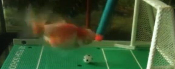 Златна рибка играе футбол (ВИДЕО)