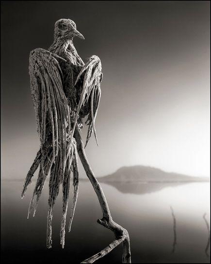 lake-calcifies-animals-frozen-dove_72198_600x450