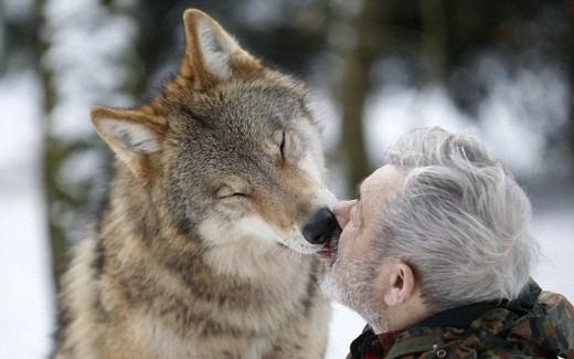 Живеещият с вълци (СНИМКИ)