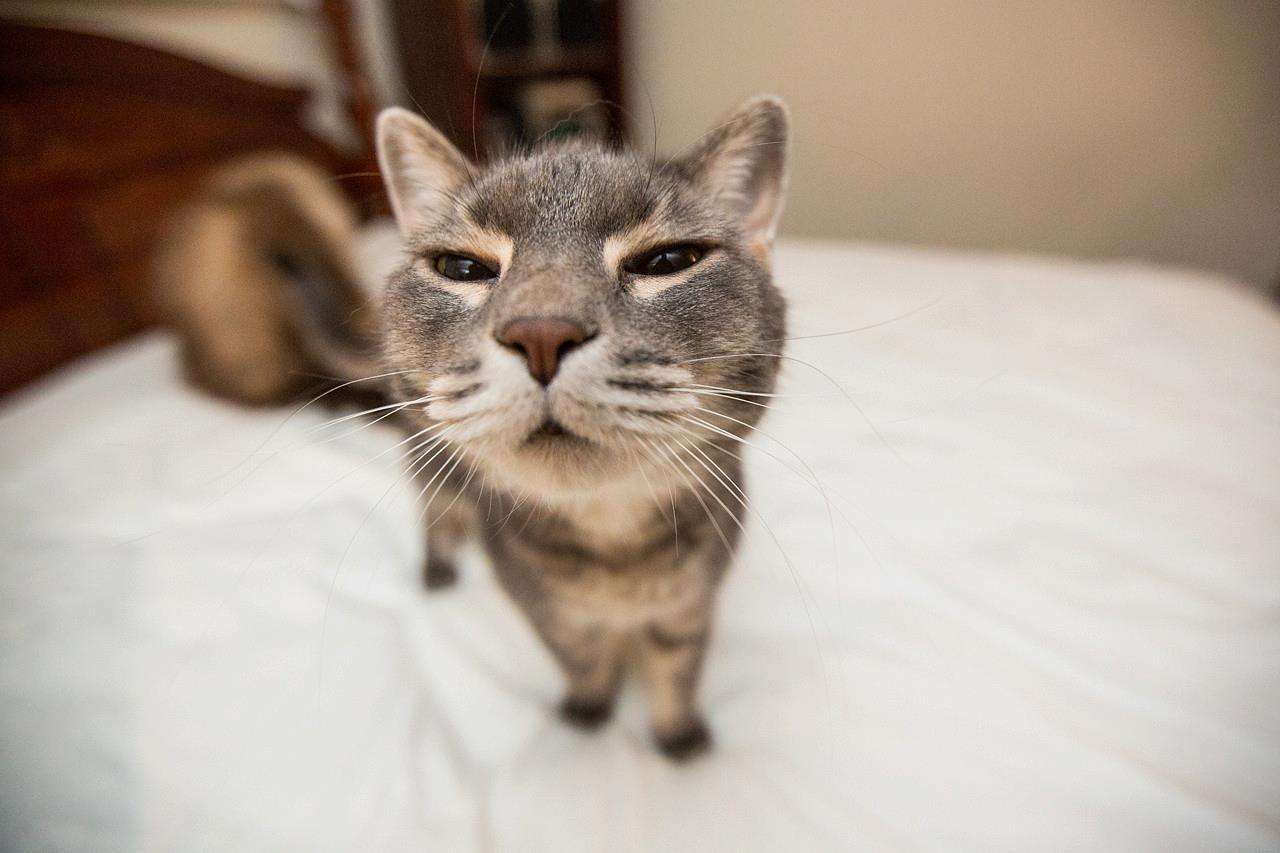"""Котка играе успешно на """"Тука има – тука няма"""" (ВИДЕО)"""