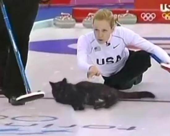 Така разбираме Олимпиадата: Кърлинг с котка (ВИДЕО)