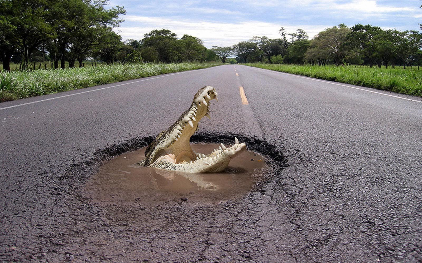funny-wallpaper-with-a-crocodile-coming-out-of-a-hole-in-the-road