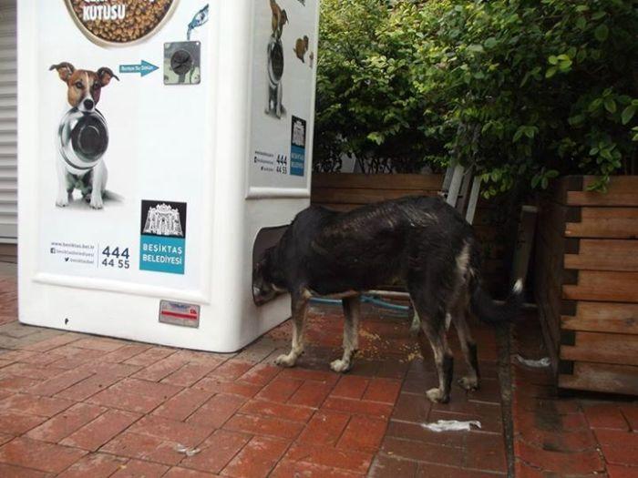 Машина храни бездомни кучета срещу празни бутилки