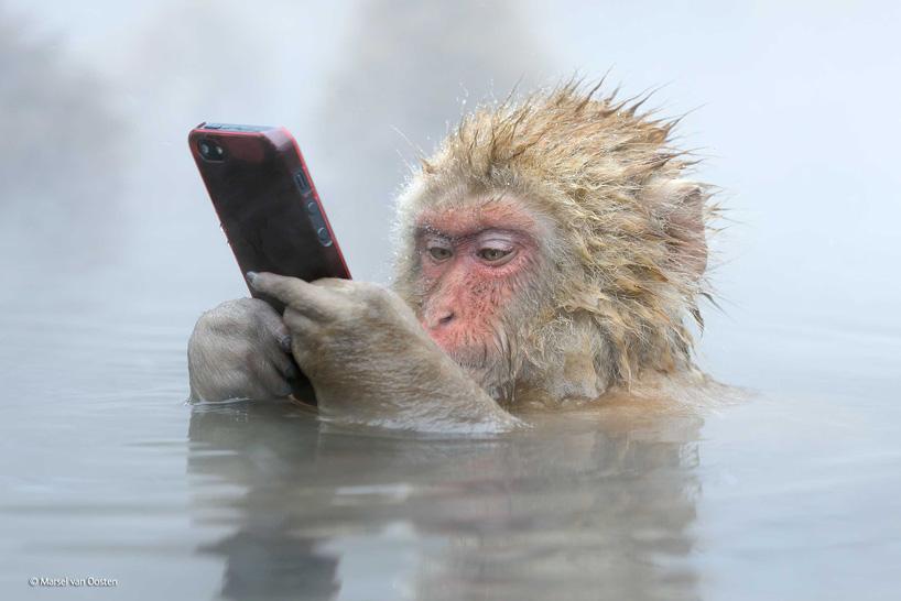 Маймуна с айфон и други от най-добрите снимки на дивата природа през 2014 г.