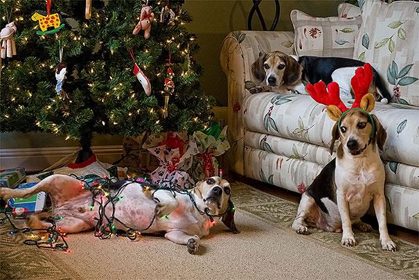 XX-animals-destroying-Christmas-13__605