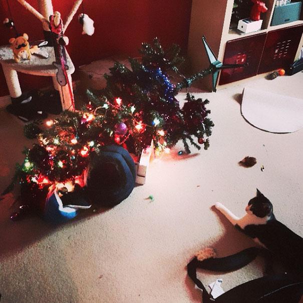 XX-animals-destroying-Christmas-4__605