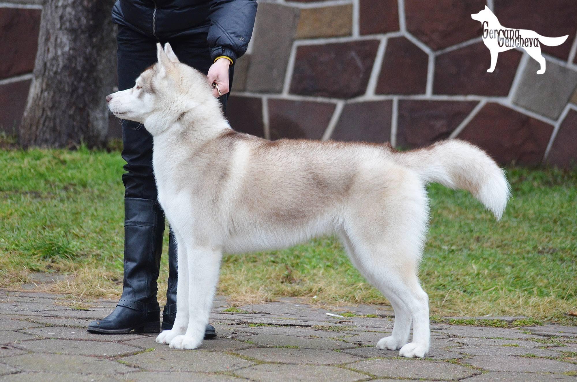Чаровната шампионка Тру – едно наистина специално куче