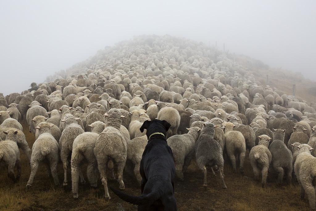 Как работят кучетата по света (СНИМКИ)