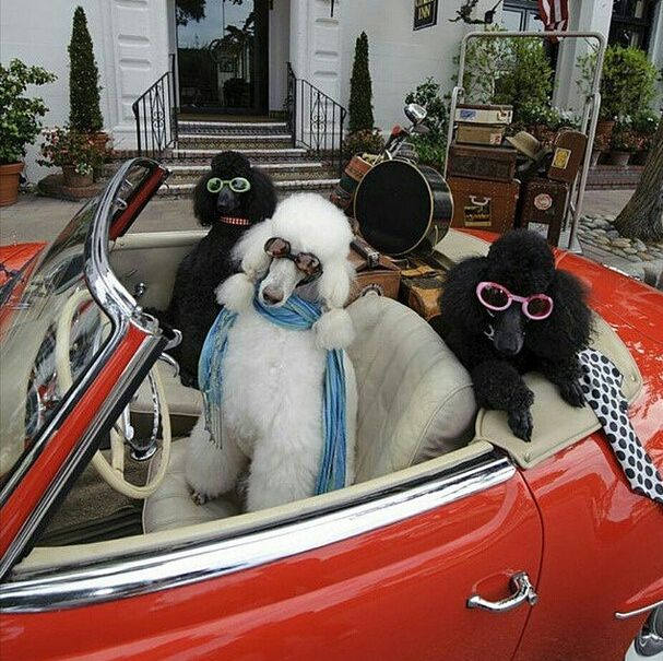 rich_dogs_05