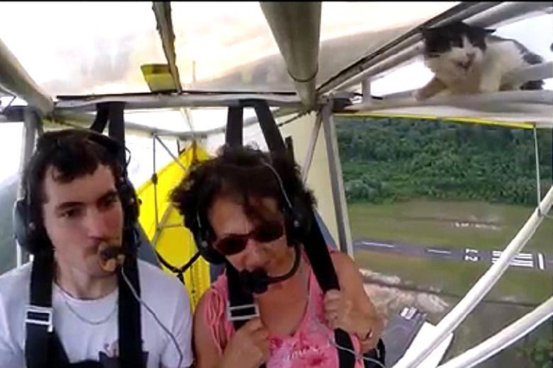 Котка влиза в самолет по време на полет (ВИДЕО)