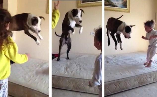 Деца скачат на креват, кучето ги имитира (ВИДЕО)