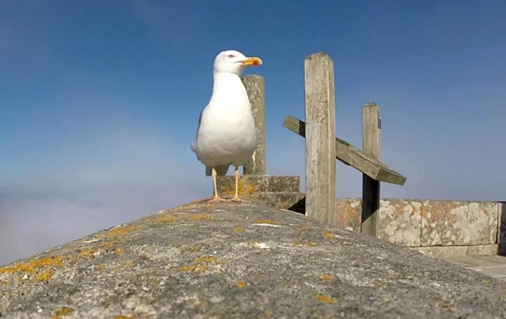 Чайка краде GoPro камера (ВИДЕО)