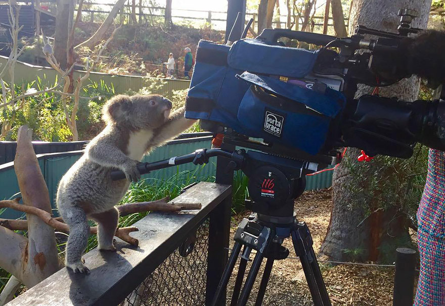 animals-with-camera-helping-photographers-16__880