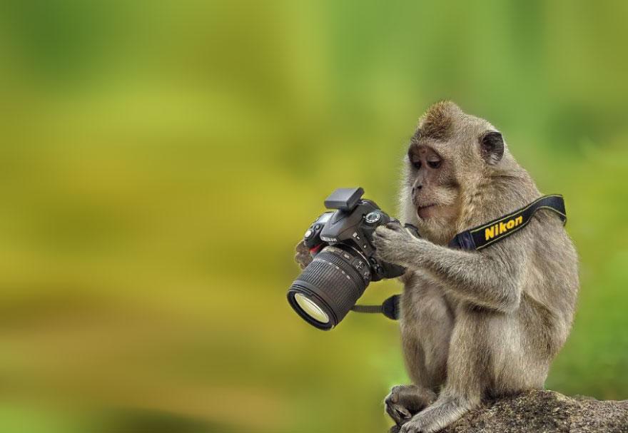 Сурикат, коала и още животни, които мечтаят да са фотографи (СНИМКИ)