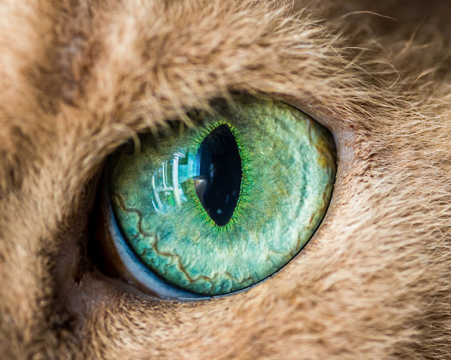 Уникални макро снимки на котешки оченца