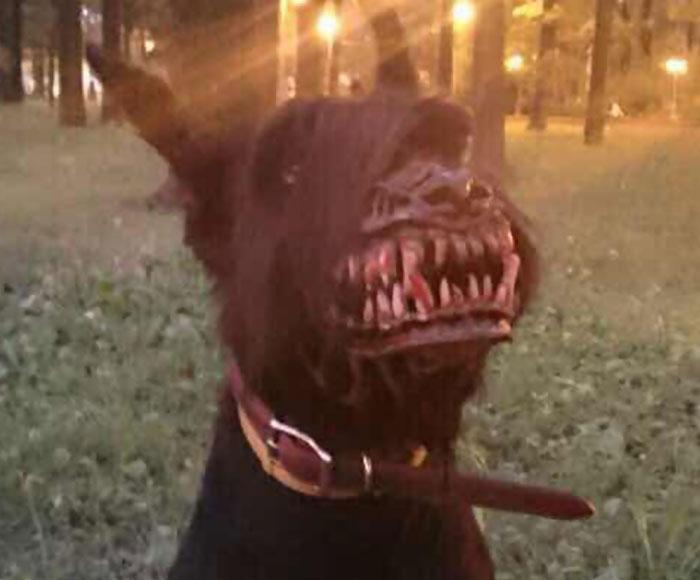 Руският намордник, с който кучето ти ще изглежда като от филм на Стивън Кинг