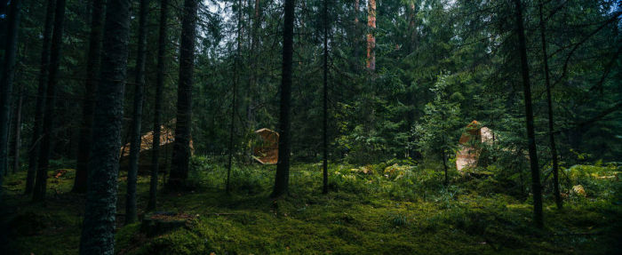listen_to_the_forest_09