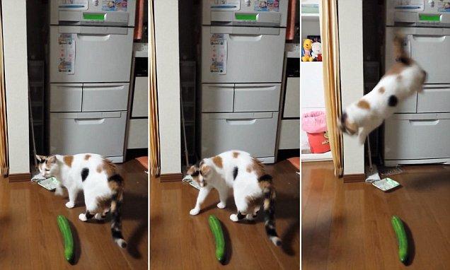 Котките се страхуват от краставици, а не от кучета (ВИДЕО)