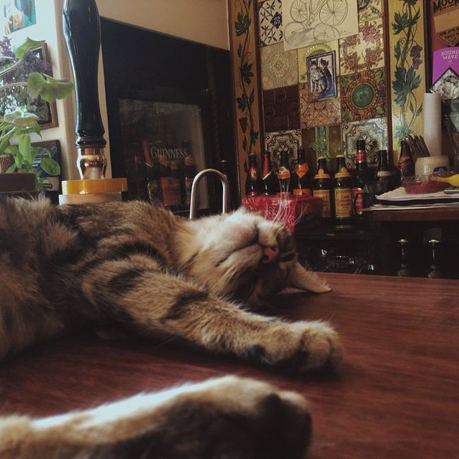 cat_pub_06