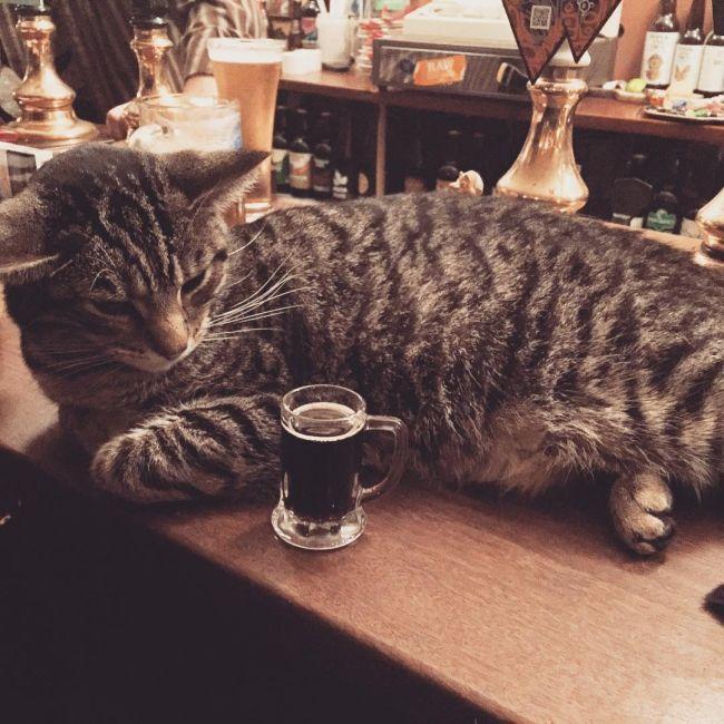 cat_pub_08