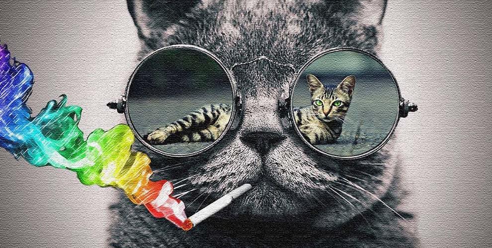 Животът през очите на една котка (СНИМКИ)
