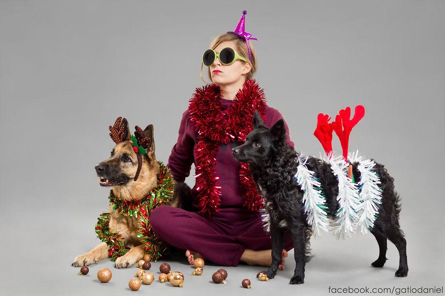 i-took-christmas-themed-dog-portraits-to-wish-you-happy-holidays-7__880
