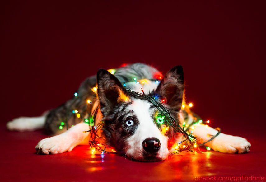 Кучета, които вярват в Дядо Коледа (СНИМКИ)