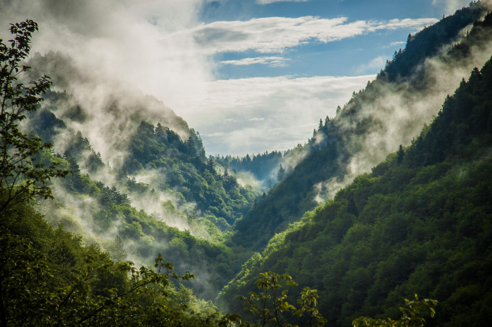 Дъхът на гората, Снимка: Stoycho Stoev