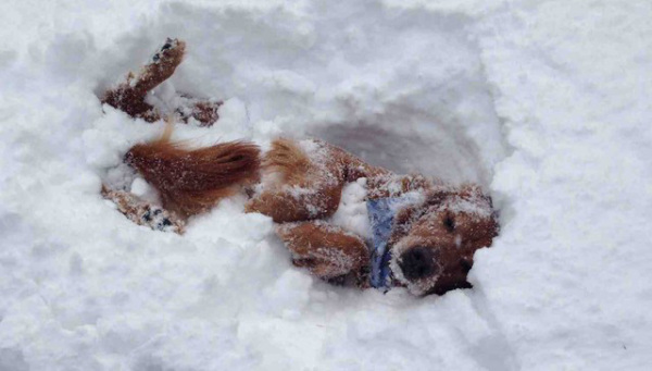 Как животните реагираха при вида на големия сняг (СНИМКИ)