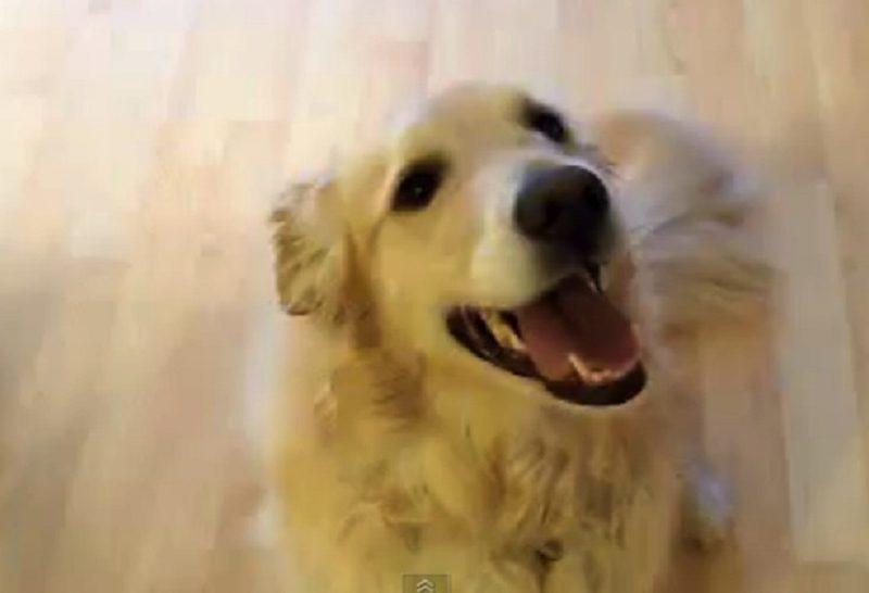 Най-подреденото куче (ВИДЕО)