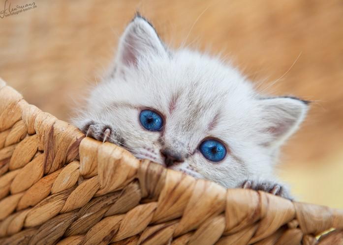 Специално за Boji86: Галерия с малки котета