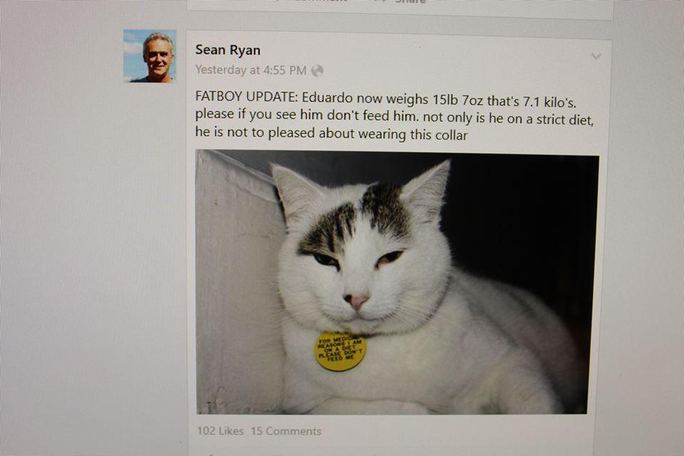 Дебела котка скара съседи в Англия
