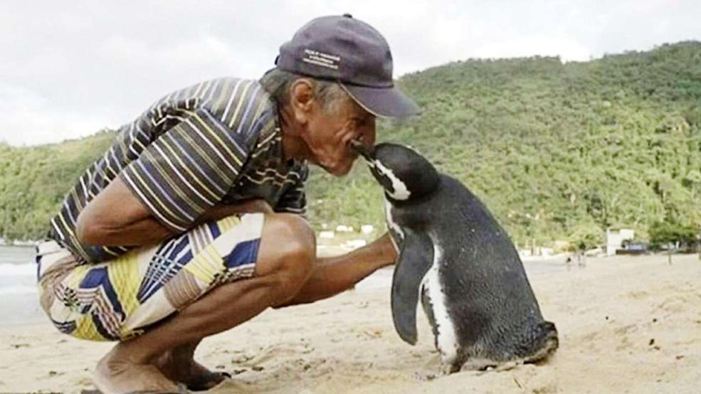 Пингвин плува 8000 километра всяка година, за да види спасителя си