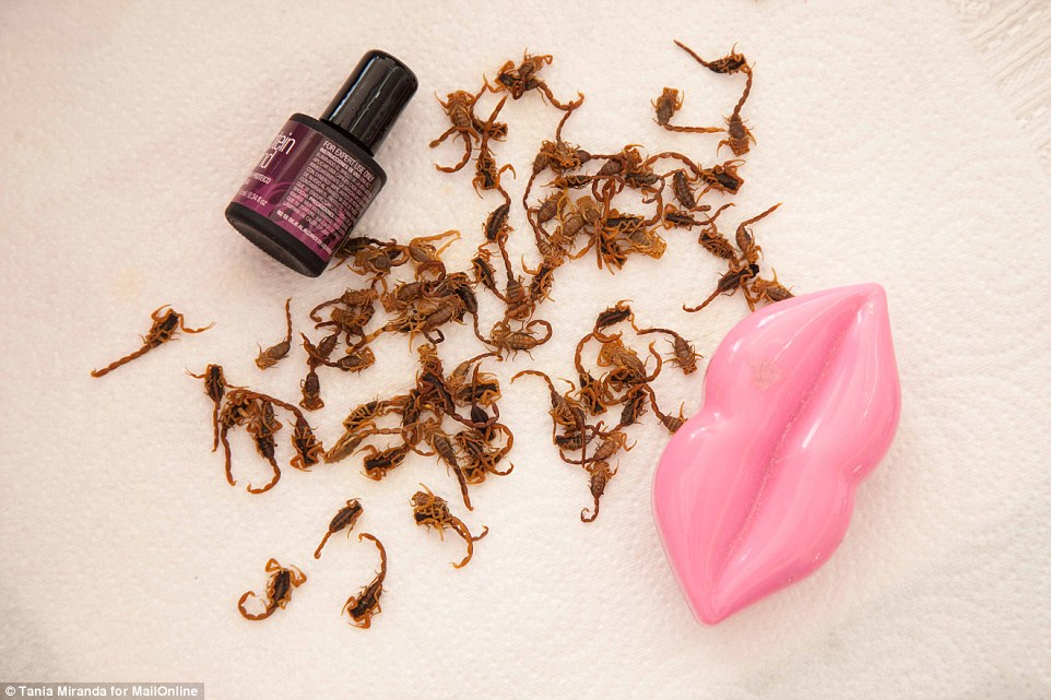 61921_31F5F6D000000578-3480060-Beauty_essentials_Scorpions_are_piled_up_next_to_a_pot_of_nail_v-a-18_1457455852228
