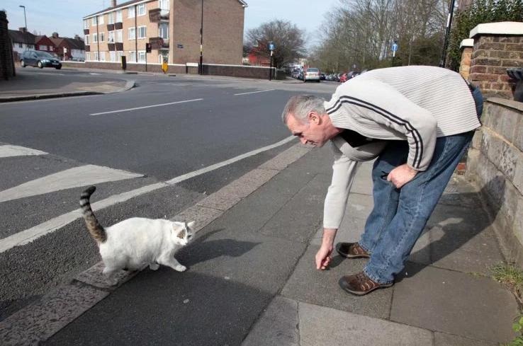Най-дебелата котка в Англия скара съседи