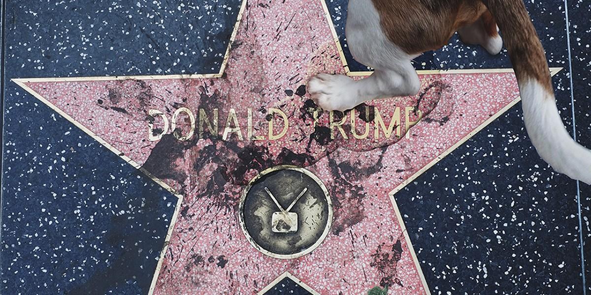 Кучета редовно дрискат върху звездата на Тръмп на Алеята на славата