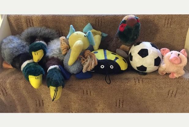 Котка краде плюшени играчки и чорапи от съседите