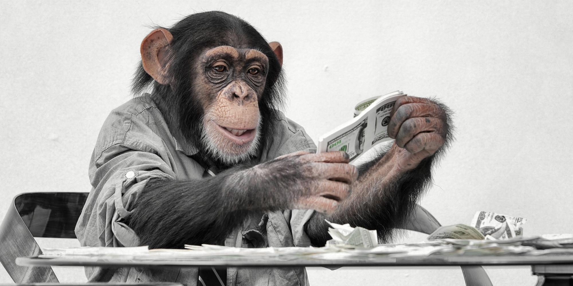 Маймуна ограби бижутерски магазин след хитър план