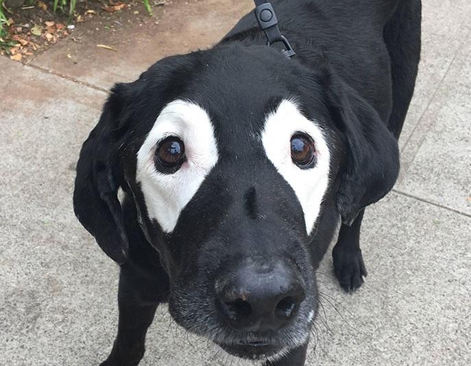 Старото куче Цецо, което стана жертва на колажи (СНИМКИ)