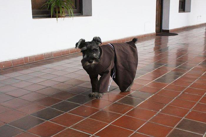Кучето, което стана монах (СНИМКИ)