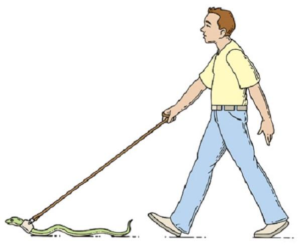 Глобиха мъж, разхождал питона си без каишка