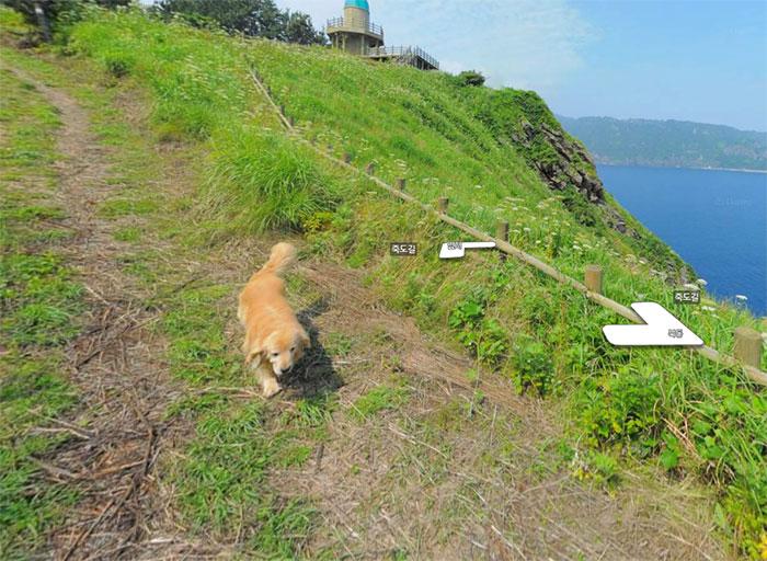 Куче преследва камера на Google Street View и прави фото бомба на снимките