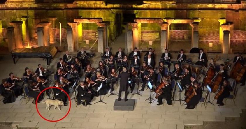 Как улично куче засенчи Виенския камерен оркестър (ВИДЕО)