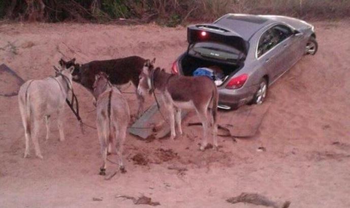 Айдуци опитаха да откраднат Mercedes C-Class с четири магарета