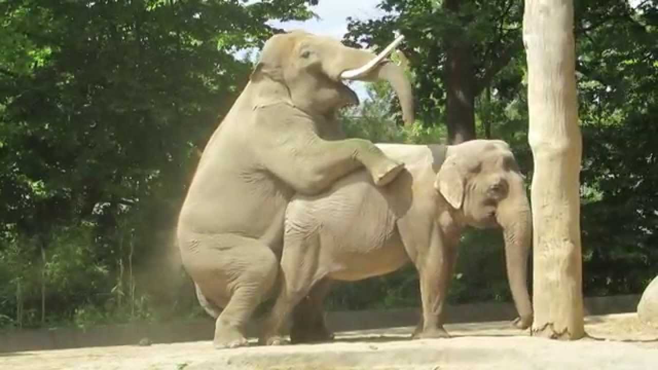Бежанец изнасили пони в зоологическа градина в Берлин
