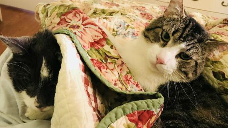 Учителка плати 19 000 долара за трансплантация на бъбрек на котката си