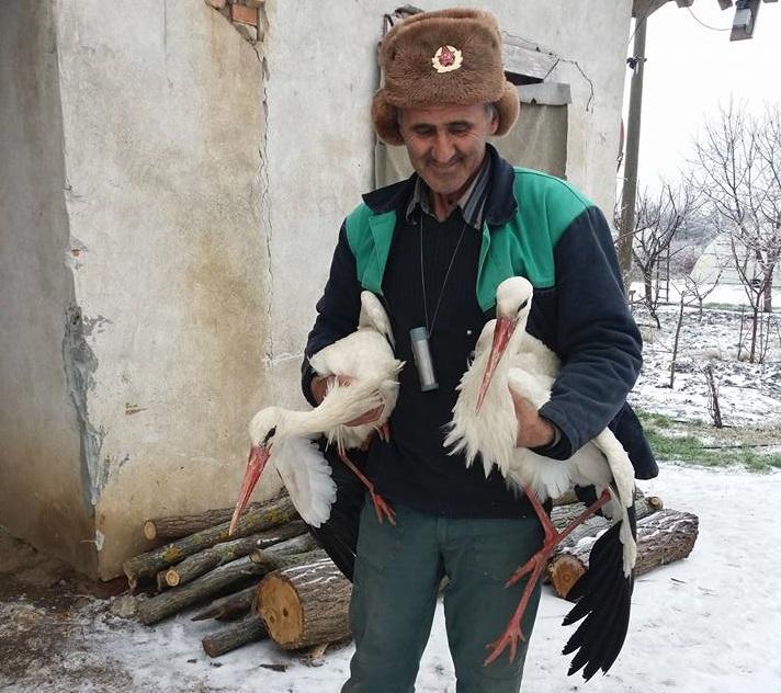 Българинът, който приюти щъркели в дома си и така ги спаси от измръзване