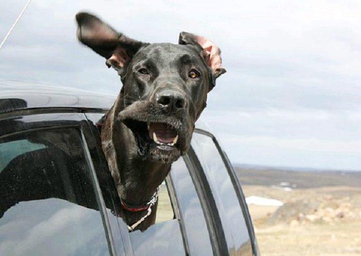 Кучето – доказано най-добрият приятел на човека