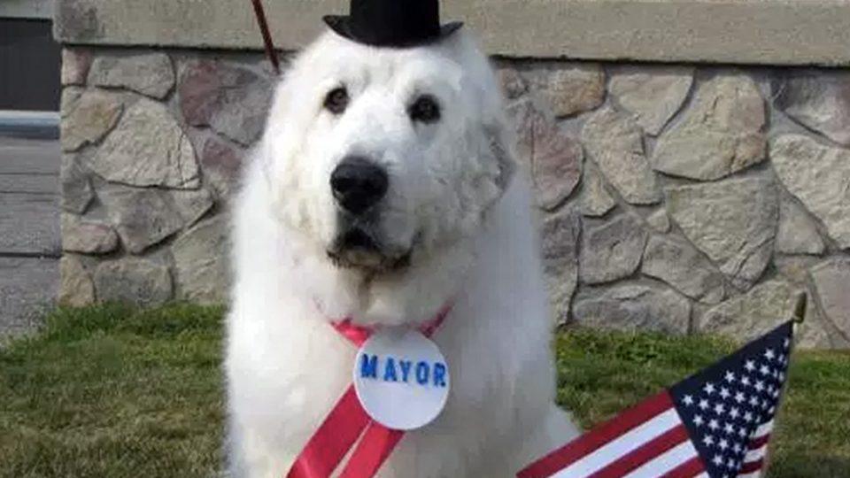 Куче се пенсионира след четири мандата като кмет